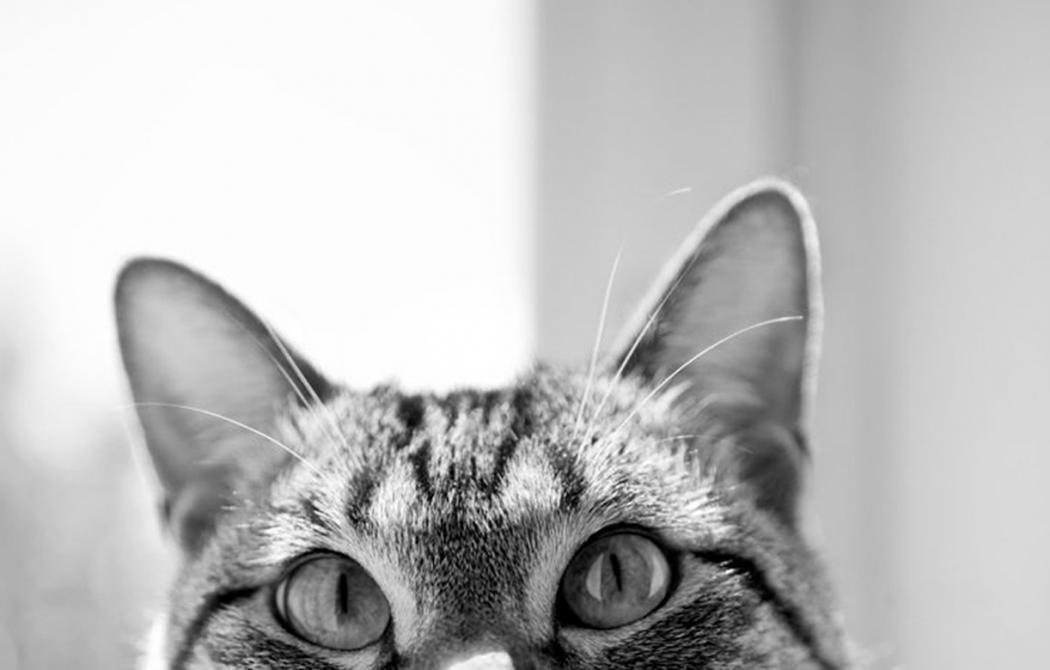 Любопытство сгубило кошку